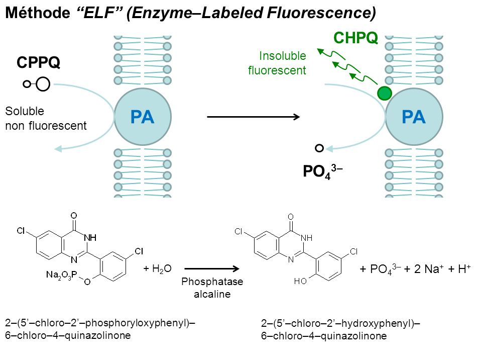 PA PA Méthode ELF (Enzyme–Labeled Fluorescence) CHPQ CPPQ PO43–