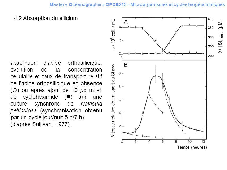 4.2 Absorption du silicium