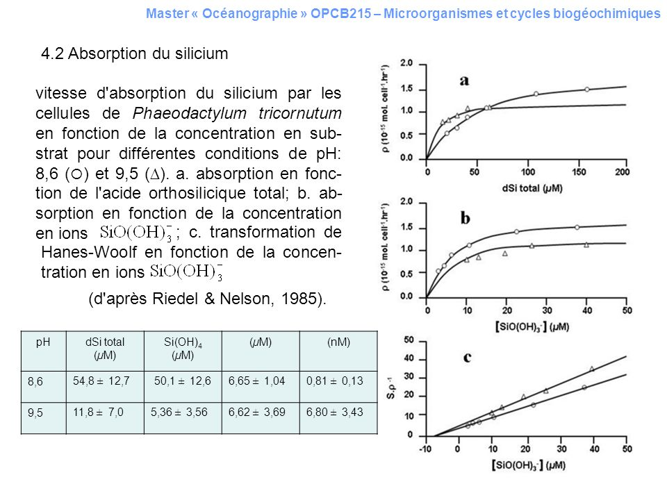 4.2 Absorption du silicium