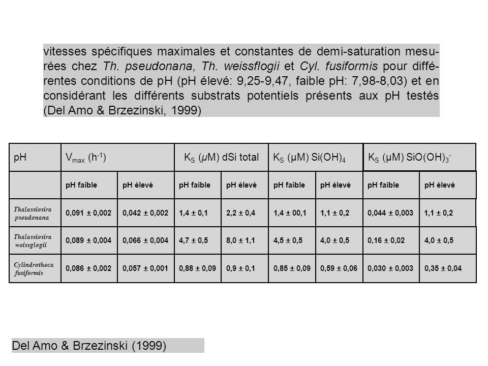 vitesses spécifiques maximales et constantes de demi-saturation mesu-rées chez Th. pseudonana, Th. weissflogii et Cyl. fusiformis pour diffé-rentes conditions de pH (pH élevé: 9,25-9,47, faible pH: 7,98-8,03) et en considérant les différents substrats potentiels présents aux pH testés (Del Amo & Brzezinski, 1999)