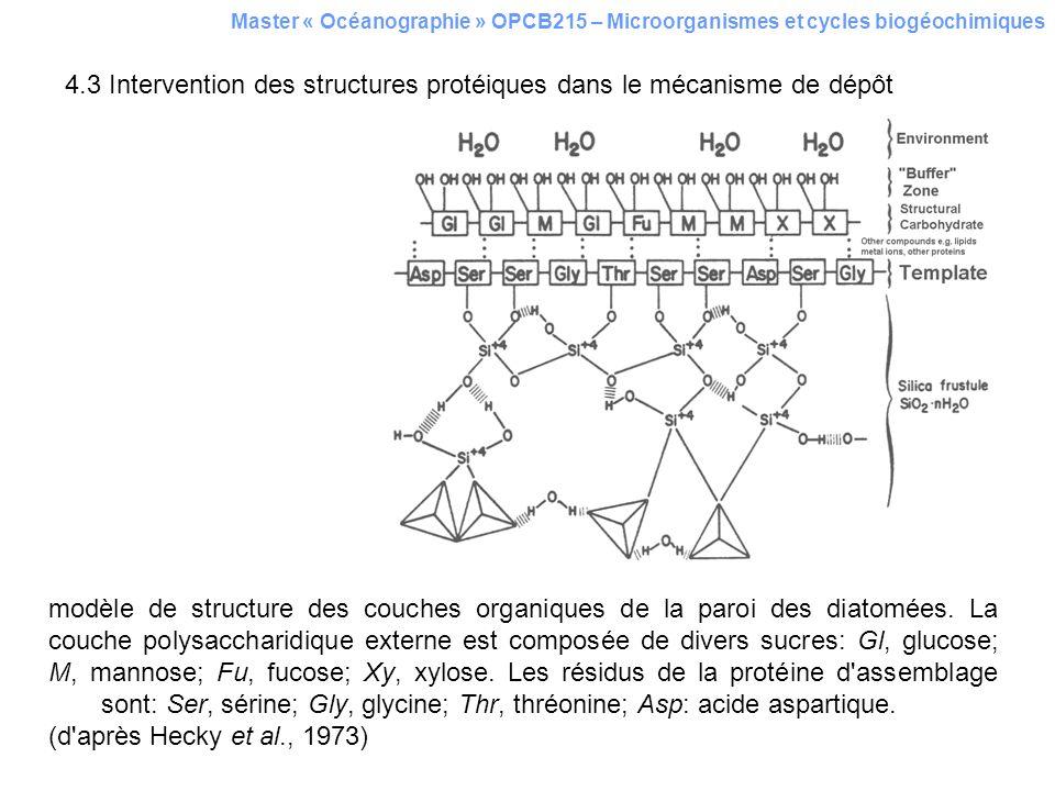 4.3 Intervention des structures protéiques dans le mécanisme de dépôt