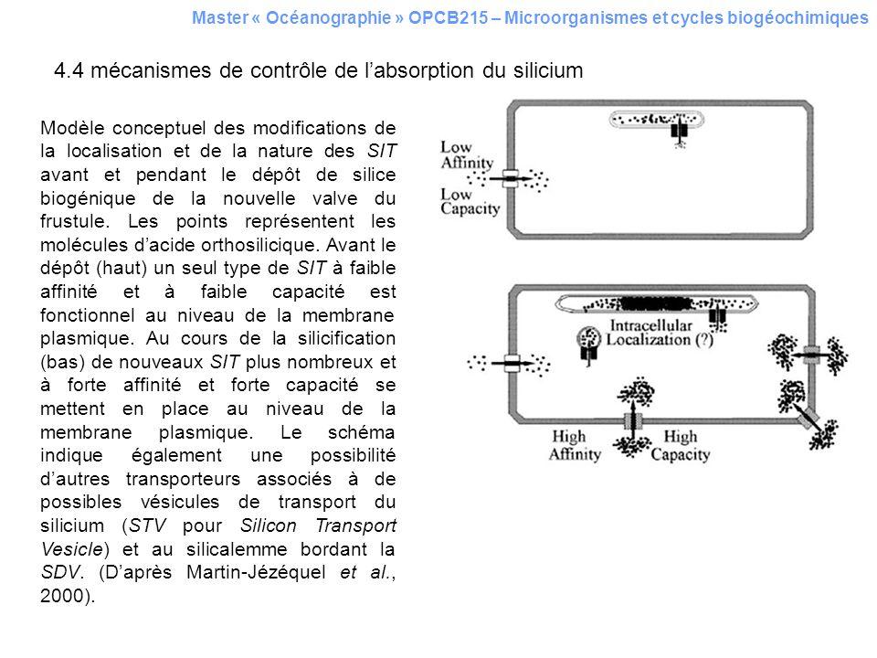 4.4 mécanismes de contrôle de l'absorption du silicium
