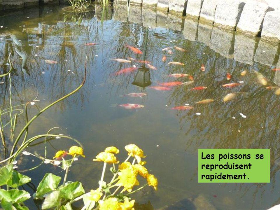 Les poissons se reproduisent rapidement.