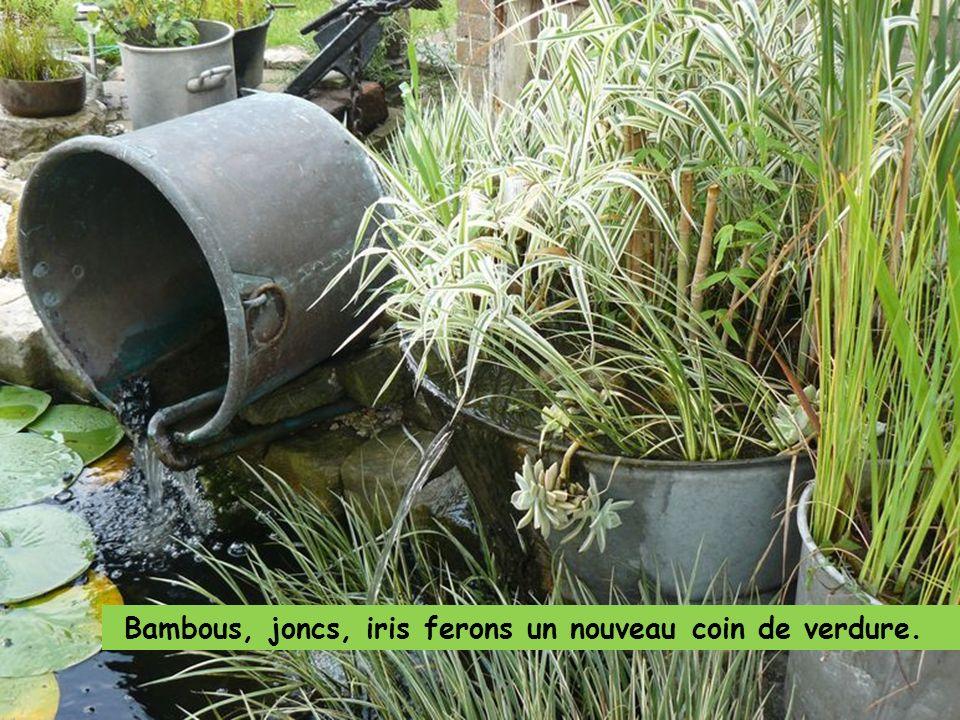 Bambous, joncs, iris ferons un nouveau coin de verdure.