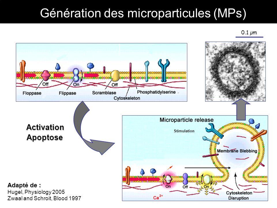 Génération des microparticules (MPs)