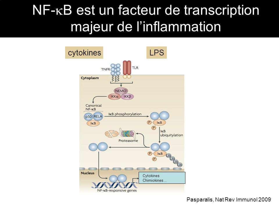 NF-B est un facteur de transcription majeur de l'inflammation