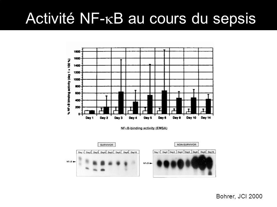 Activité NF-B au cours du sepsis