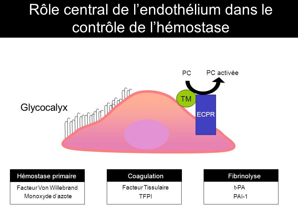 Rôle central de l'endothélium dans le contrôle de l'hémostase