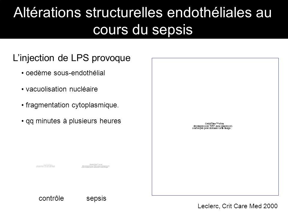 Altérations structurelles endothéliales au cours du sepsis
