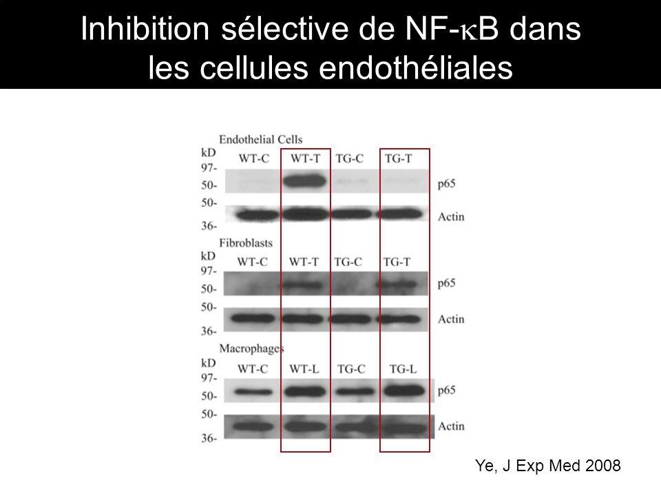 Inhibition sélective de NF-B dans les cellules endothéliales