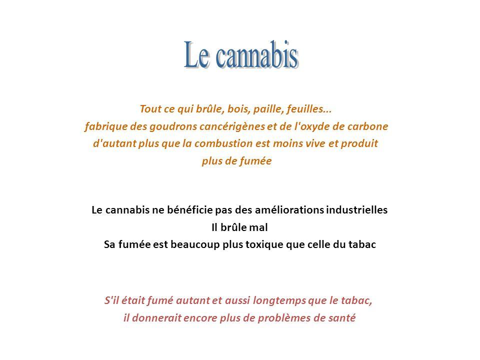 Le cannabis Tout ce qui brûle, bois, paille, feuilles...