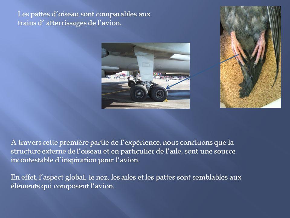 Les pattes d'oiseau sont comparables aux trains d' atterrissages de l'avion.