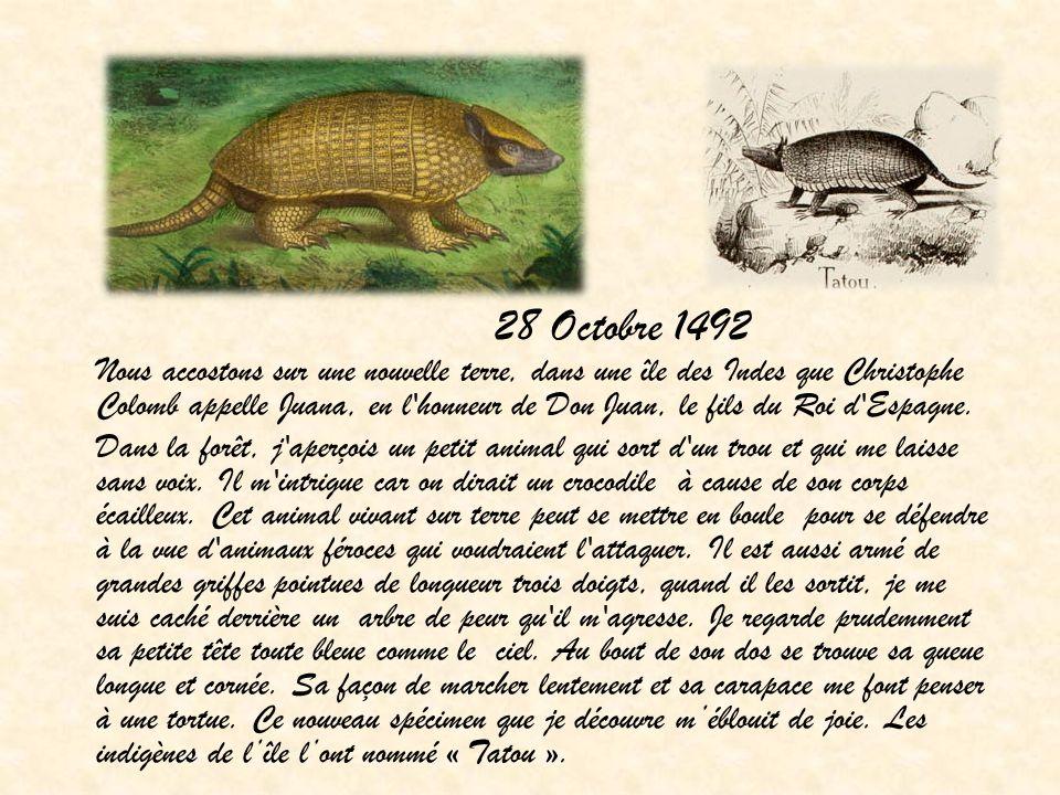 28 Octobre 1492