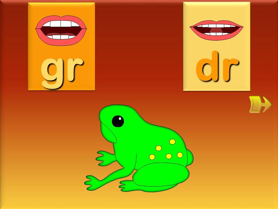 gr dr grenouille