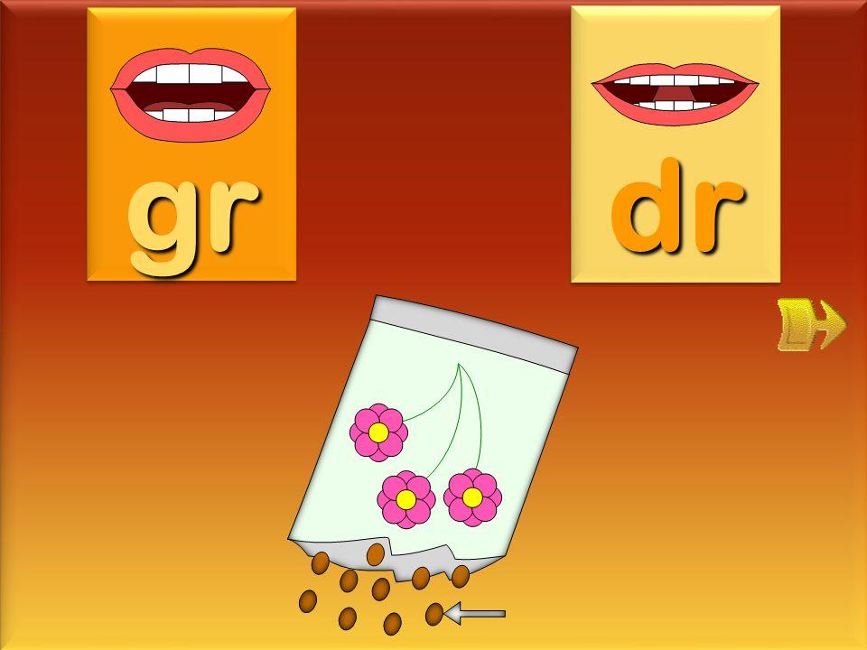 gr dr graine