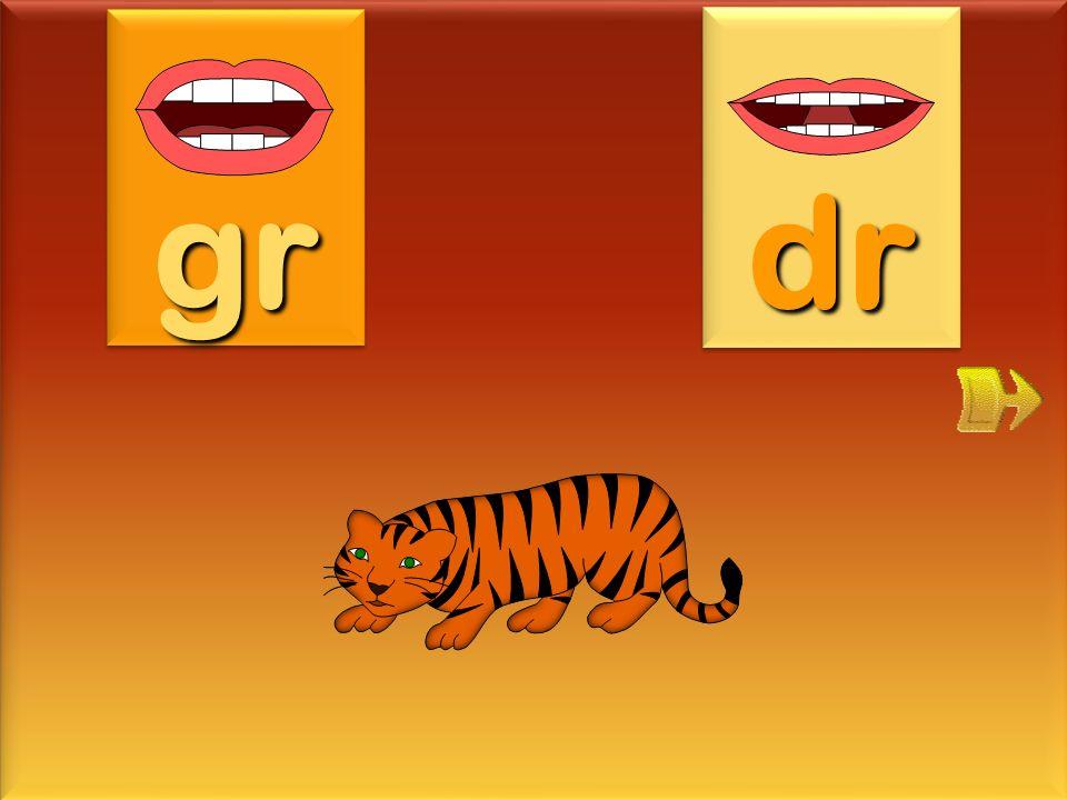 gr dr tigre