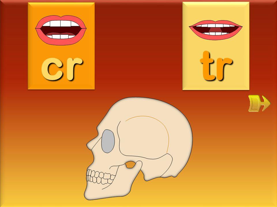 cr tr crâne