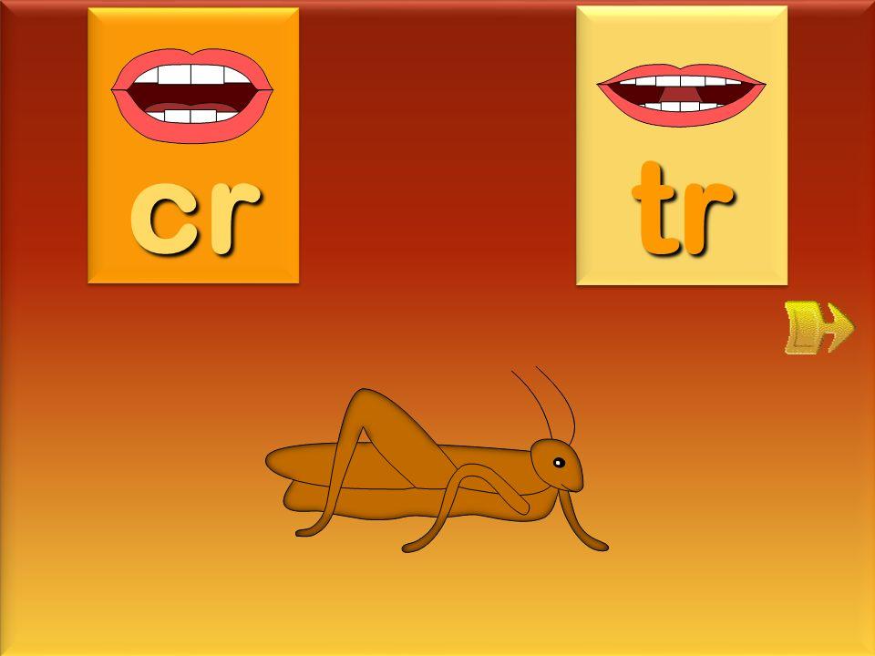 cr tr criquet