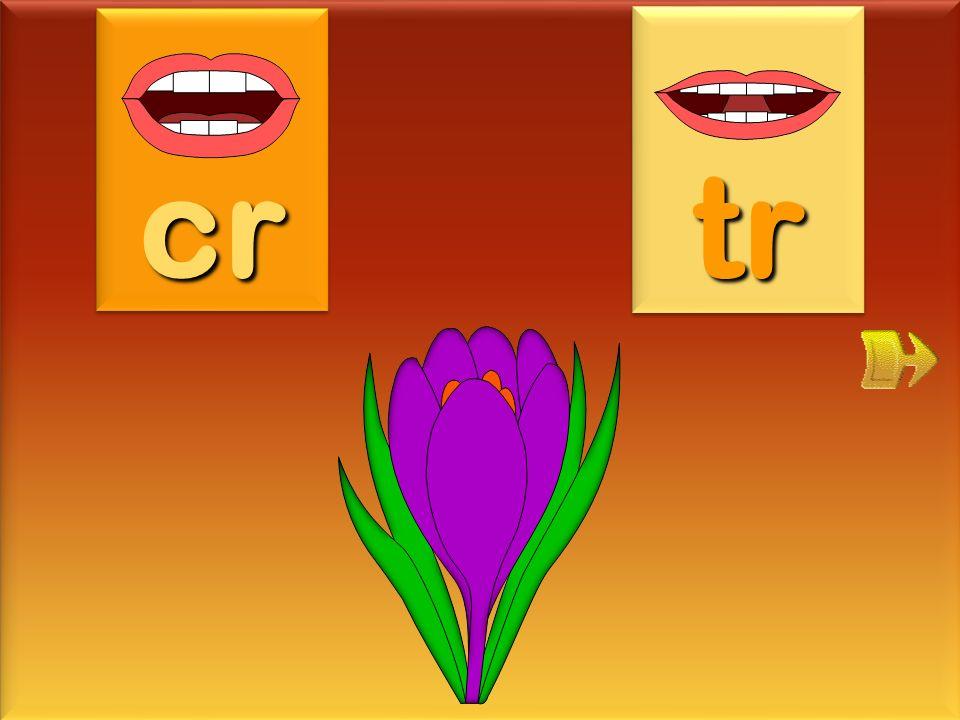 cr tr crocus