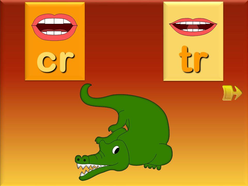 cr tr crocodile
