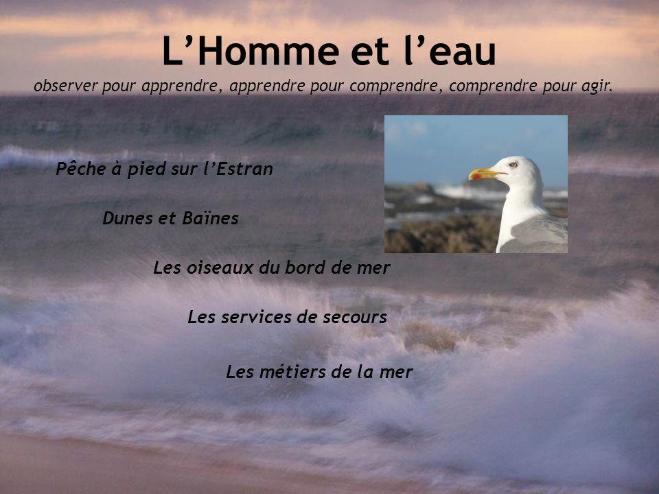 Les oiseaux du bord de mer