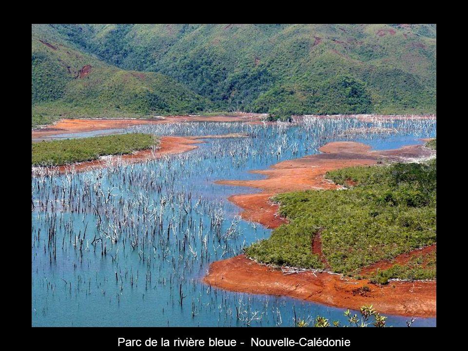 Parc de la rivière bleue - Nouvelle-Calédonie