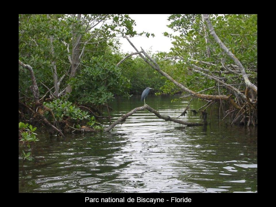 Parc national de Biscayne - Floride