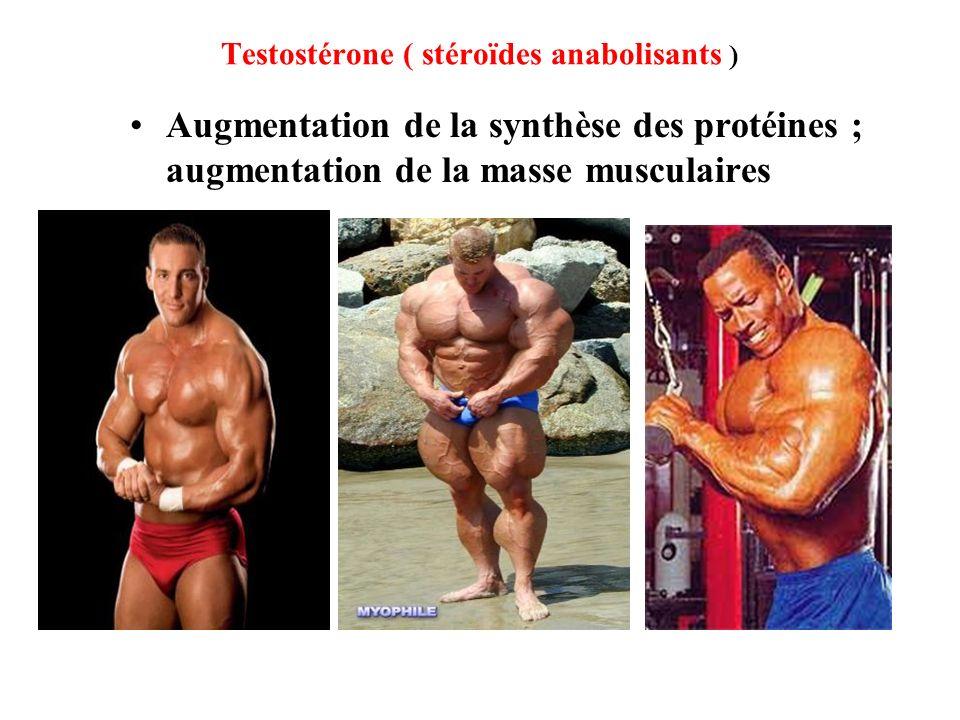 Testostérone ( stéroïdes anabolisants )