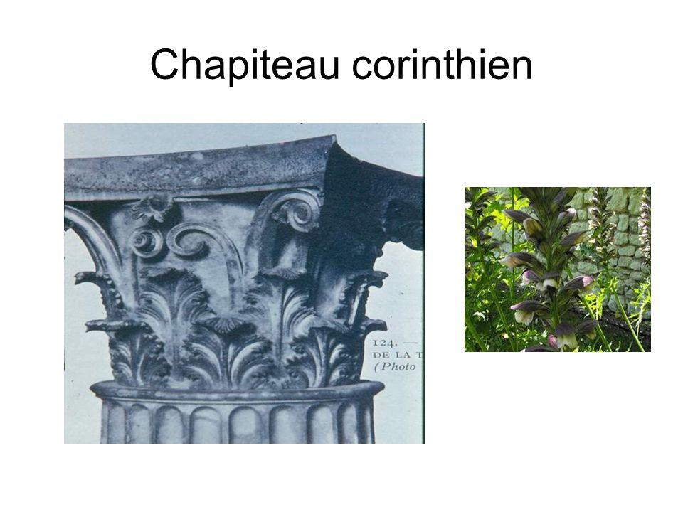 Chapiteau corinthien Chapiteau formé d'une corbeille ornée de feuilles d'acanthe (plante du midi).