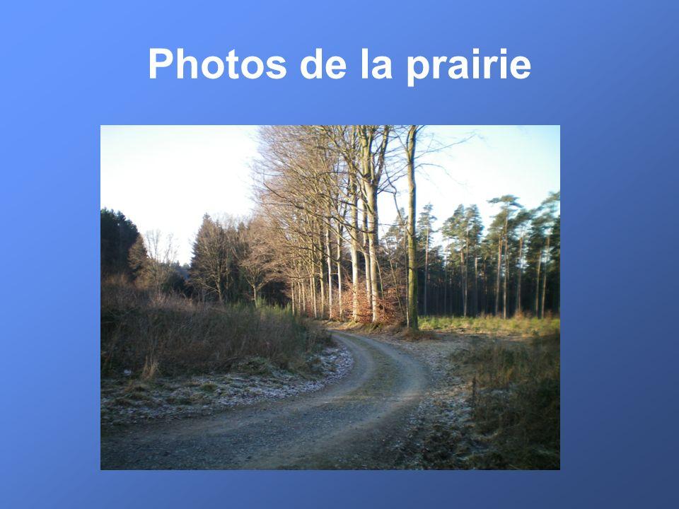 Photos de la prairie