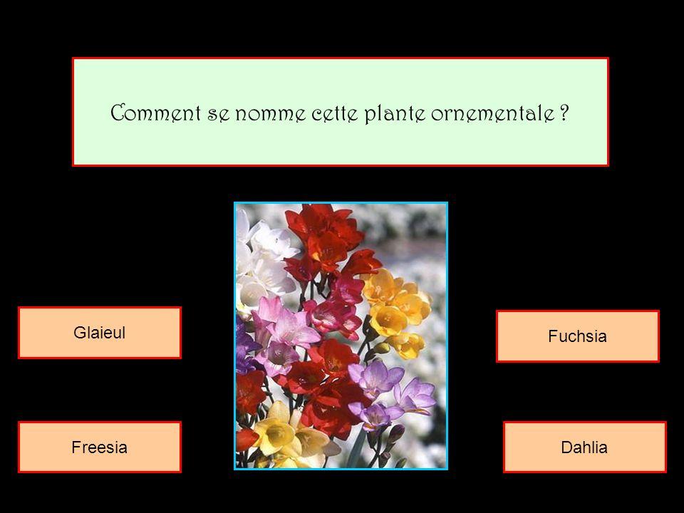 Comment se nomme cette plante ornementale