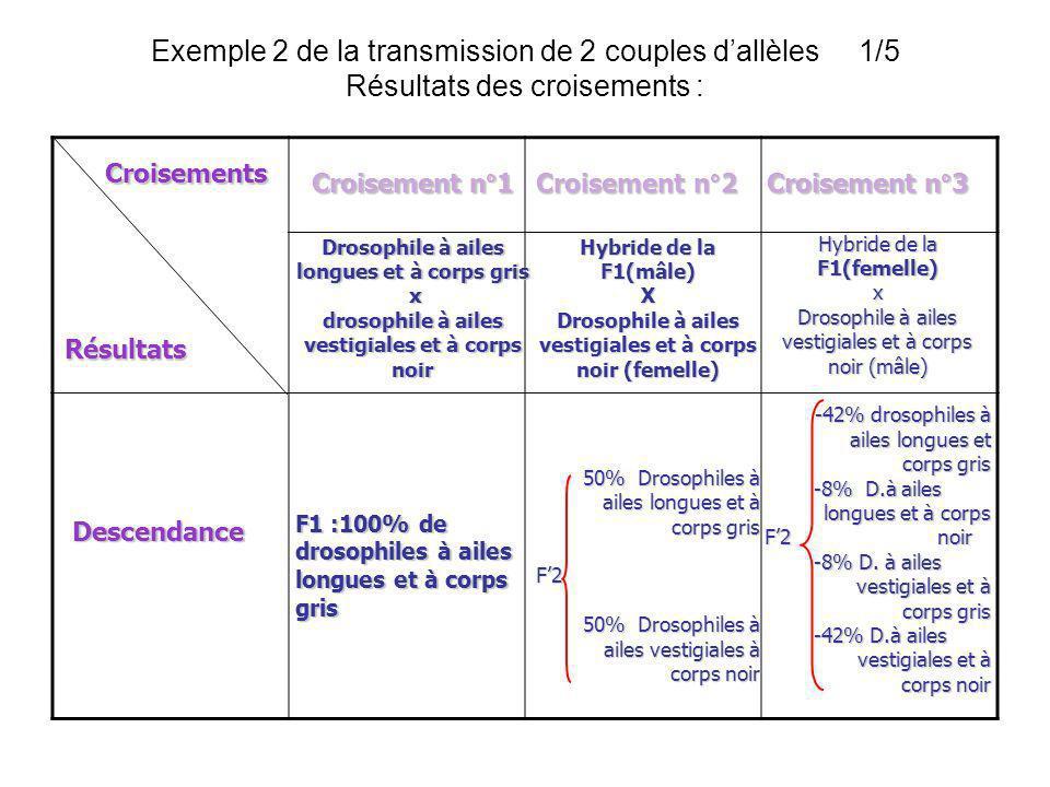 Exemple 2 de la transmission de 2 couples d'allèles 1/5 Résultats des croisements :