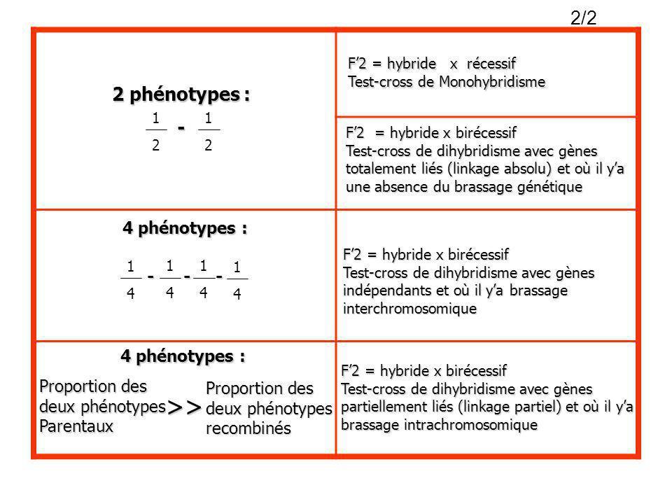>> 2/2 2 phénotypes : - 1 1 4 phénotypes : - - - 1 1 1 1