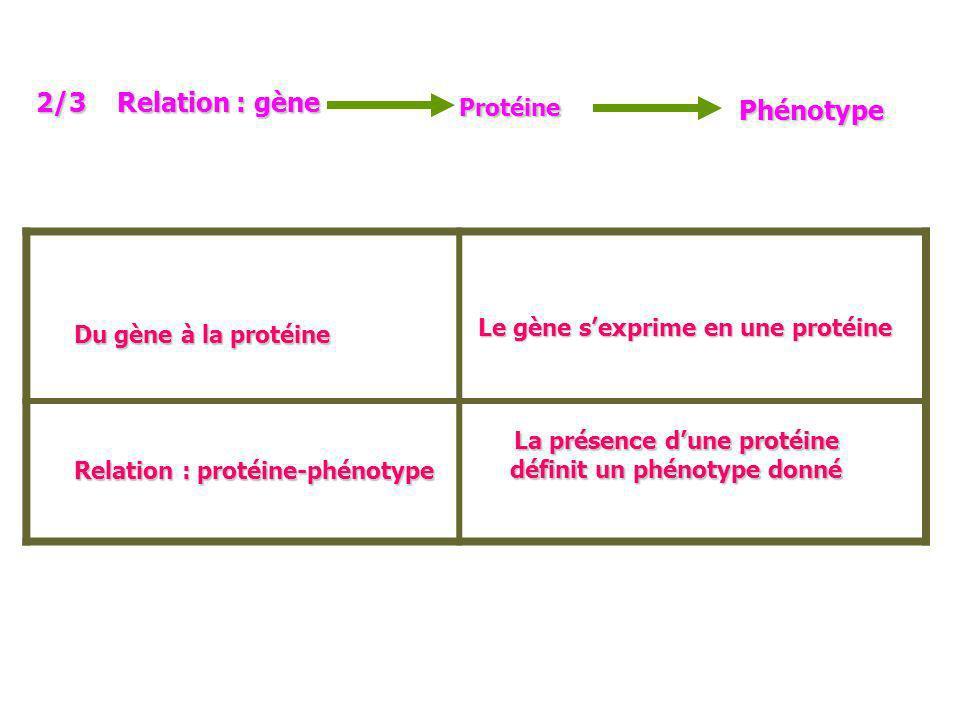 La présence d'une protéine définit un phénotype donné
