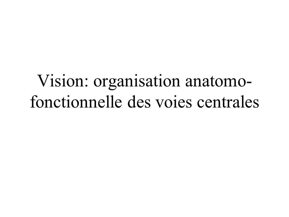 Vision: organisation anatomo-fonctionnelle des voies centrales