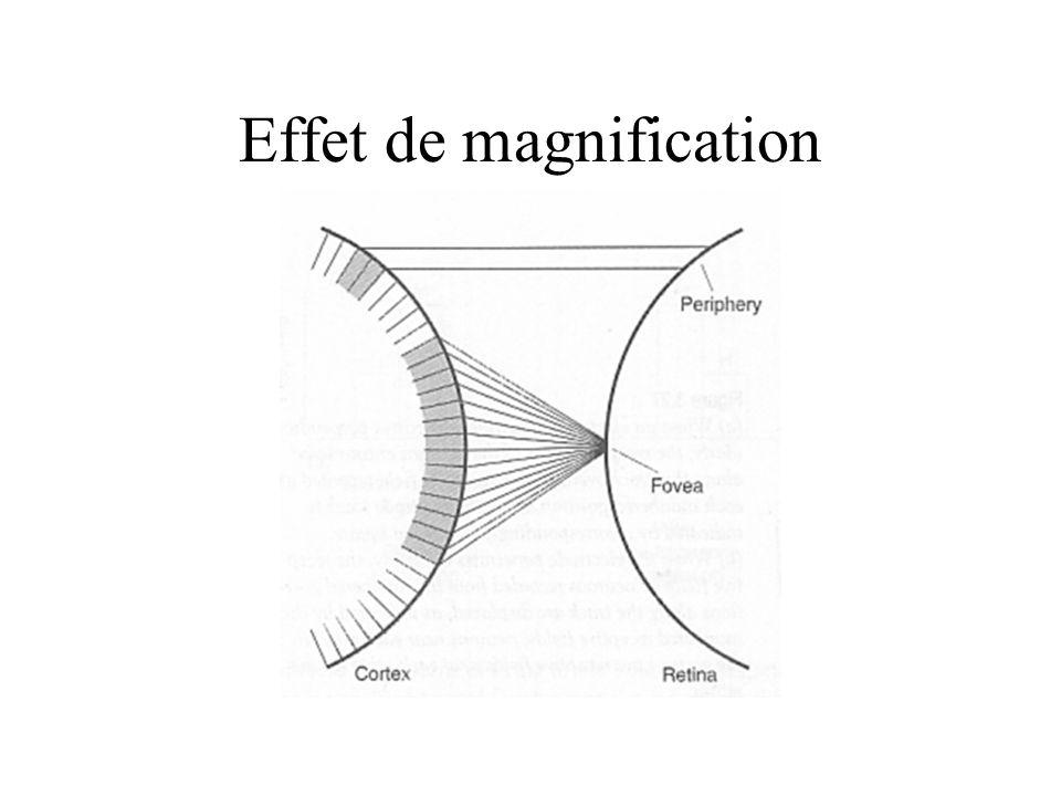 Effet de magnification