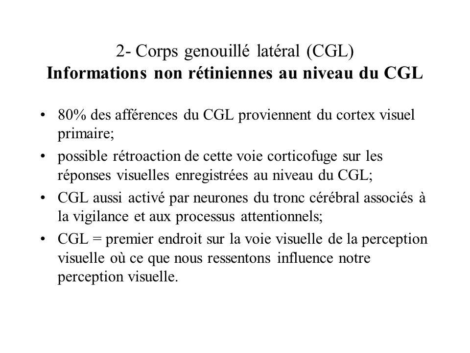 2- Corps genouillé latéral (CGL) Informations non rétiniennes au niveau du CGL