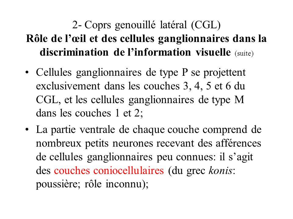 2- Coprs genouillé latéral (CGL) Rôle de l'œil et des cellules ganglionnaires dans la discrimination de l'information visuelle (suite)
