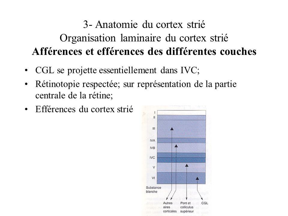 3- Anatomie du cortex strié Organisation laminaire du cortex strié Afférences et efférences des différentes couches