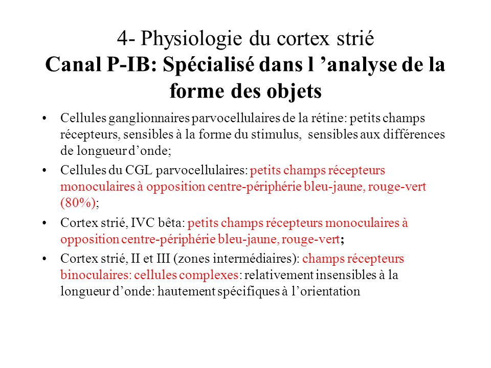 4- Physiologie du cortex strié Canal P-IB: Spécialisé dans l 'analyse de la forme des objets
