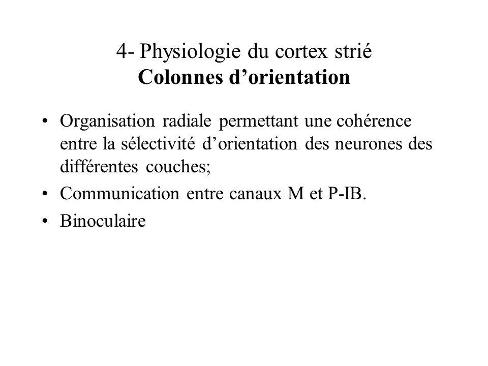4- Physiologie du cortex strié Colonnes d'orientation