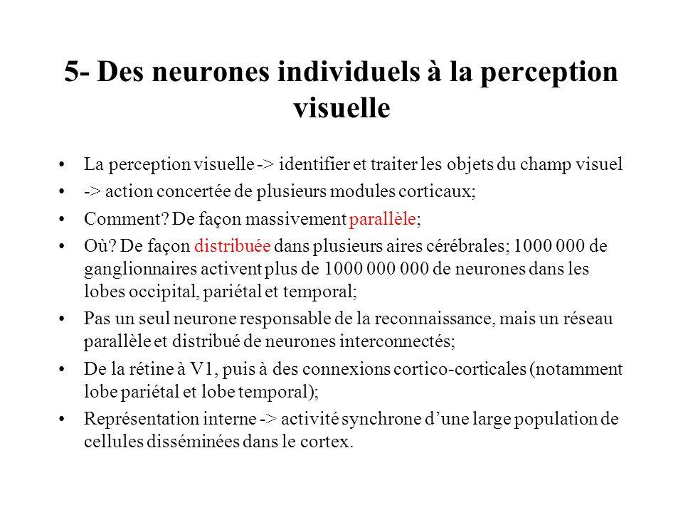 5- Des neurones individuels à la perception visuelle