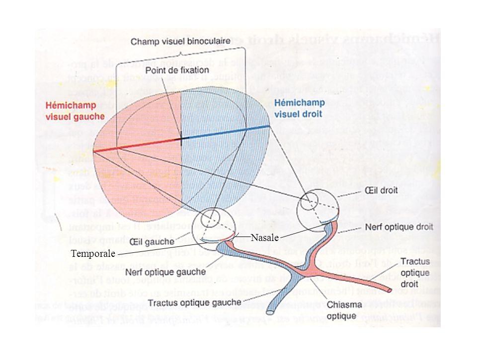 Nasale Temporale
