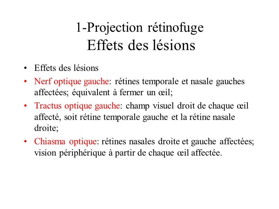 1-Projection rétinofuge Effets des lésions