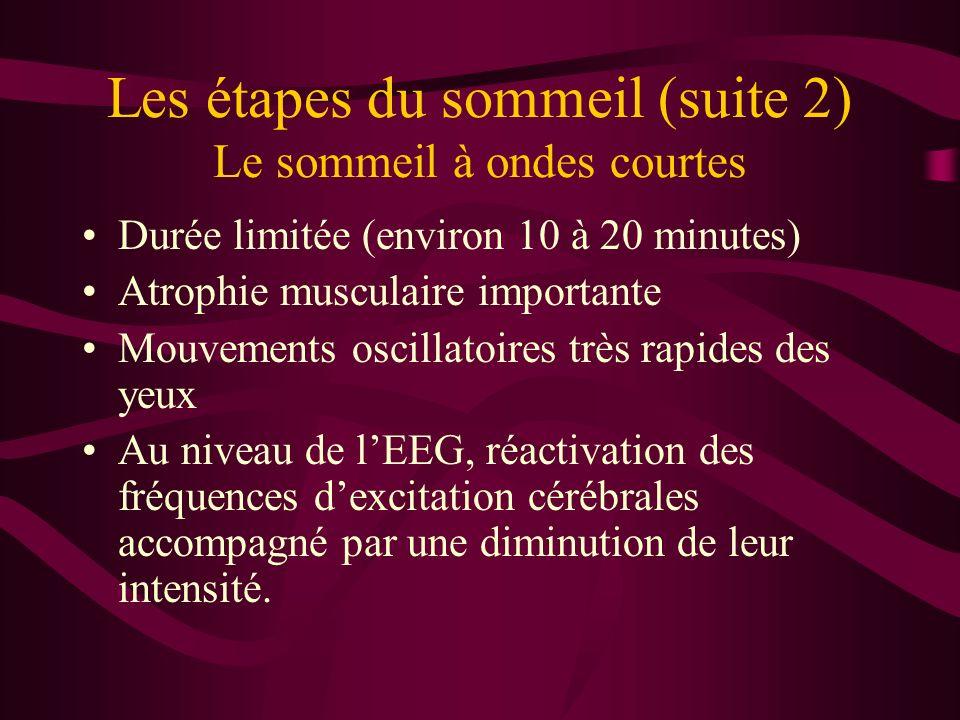 Les étapes du sommeil (suite 2) Le sommeil à ondes courtes