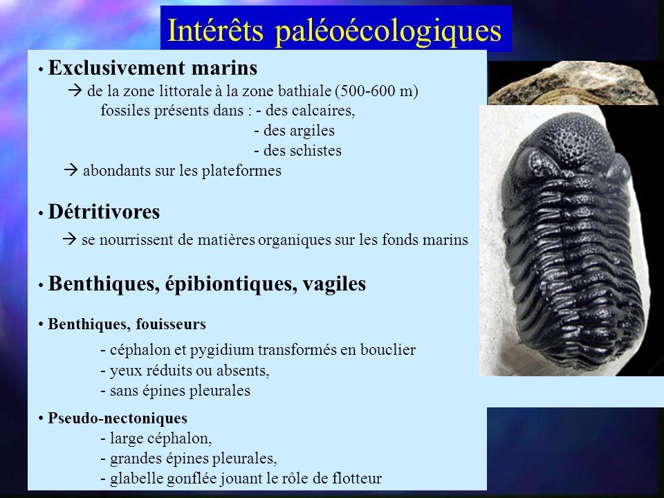 Intérêts paléoécologiques