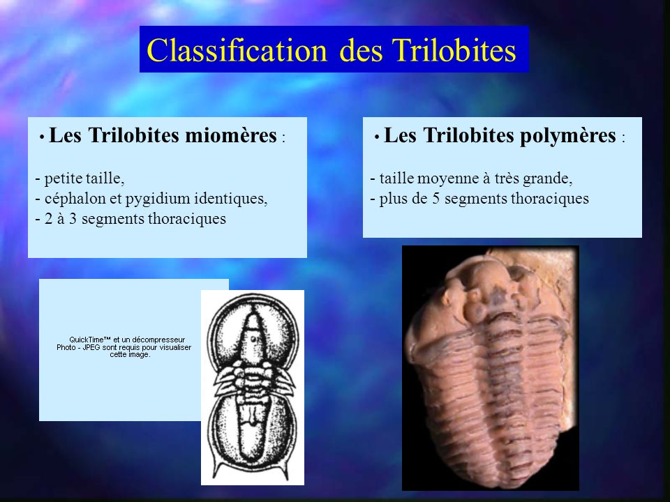 Classification des Trilobites