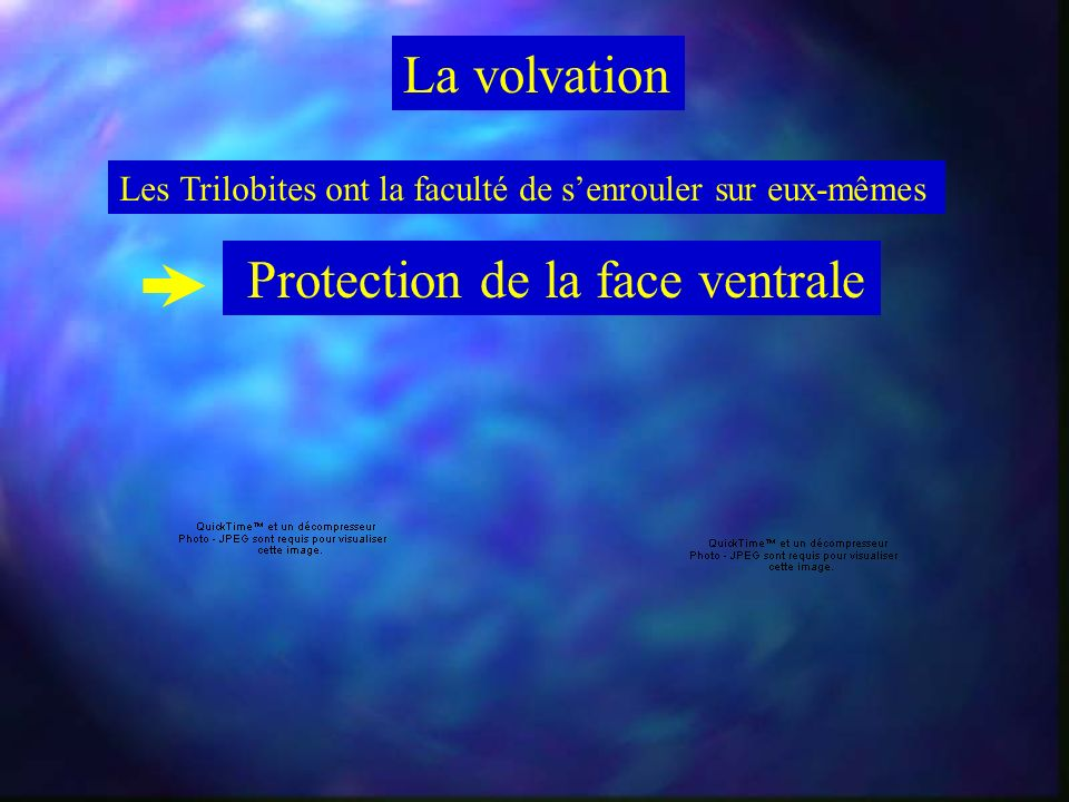 Protection de la face ventrale