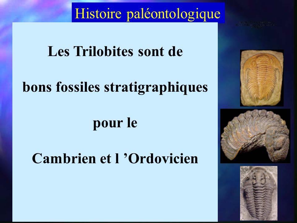 bons fossiles stratigraphiques Cambrien et l 'Ordovicien