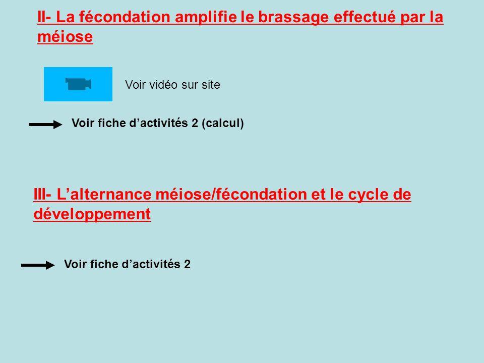 II- La fécondation amplifie le brassage effectué par la méiose